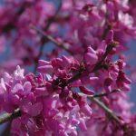 Close-up of flowers (Panasonic VX870 camcorder)
