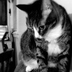 "The infamous ""gazing cat"""
