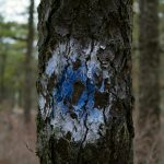 Tree on the Blue Hole path in New Jersey
