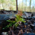 Macro shot of moss in an old stump at a park