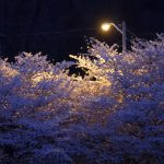 Trees that look white under a street lamp